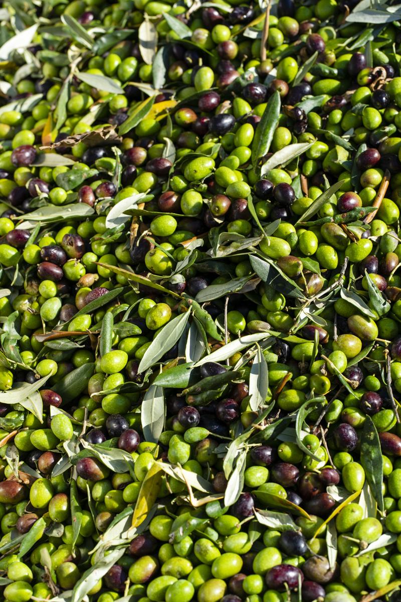 Azienda Agricola Agriturismo San Rocco