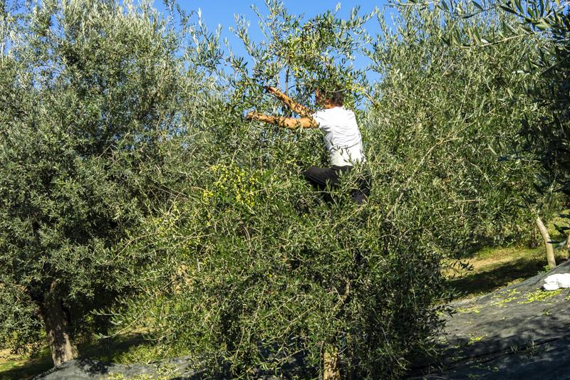 Agriturismo San Rocco in Famiglia
